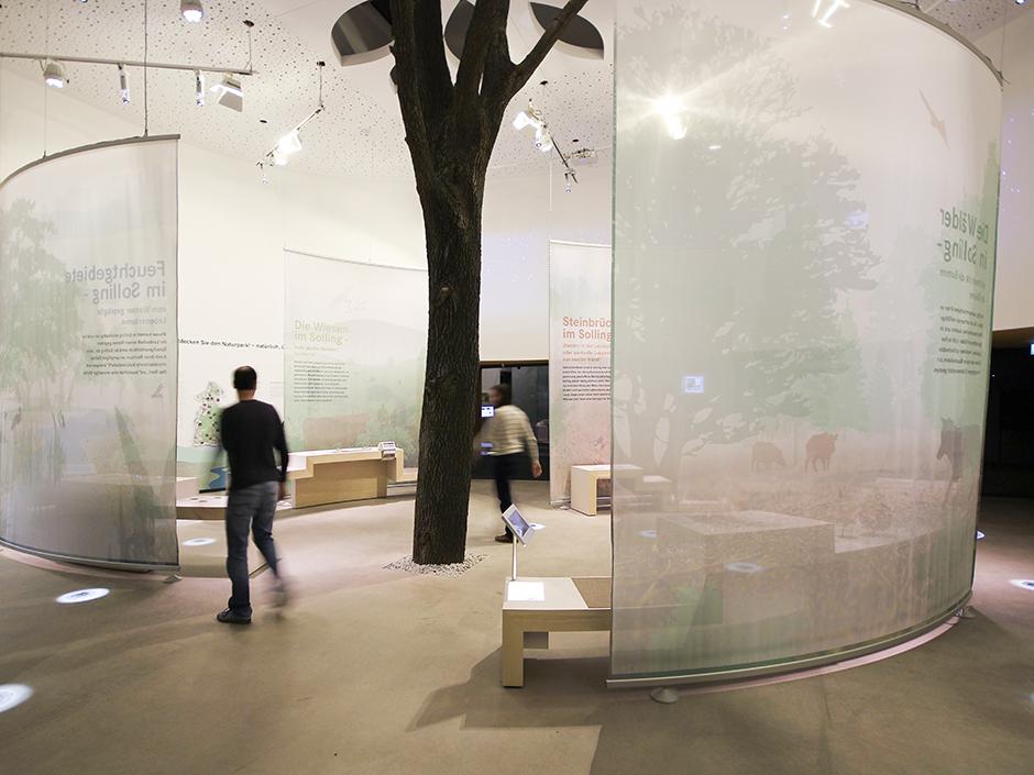 Museumsgestaltung. Ausstellungswände, Baumstamm.