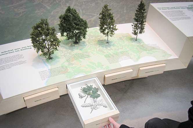 Museumsgestaltung. Vitrine mit Schublaben und Modellbäumen.
